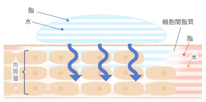 ミューノアジュ エイジングケアクリームのラメラ層構造